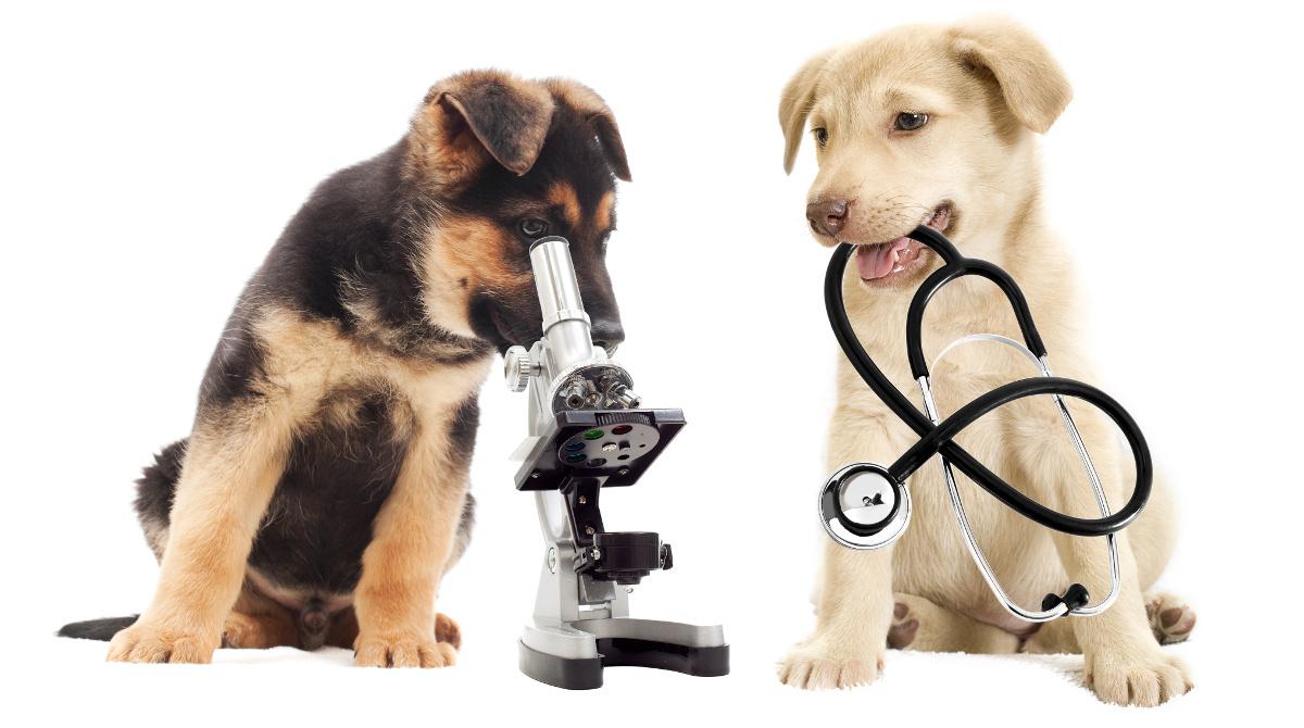 veterinaria-prodotti-alghero